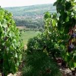 Valvital décroche la concession des thermes de Santenay